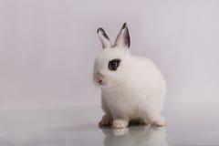 Coniglio bianco sveglio con ombretto Fotografia Stock Libera da Diritti
