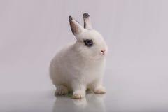 Coniglio bianco sveglio con ombretto Fotografie Stock Libere da Diritti