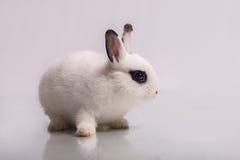 Coniglio bianco sveglio con ombretto Immagini Stock Libere da Diritti