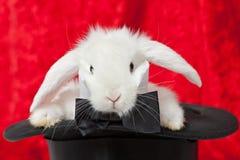 Coniglio bianco in un cilindro Immagine Stock Libera da Diritti