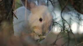 Coniglio bianco in una foresta di estate archivi video