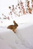 Coniglio in cima alla direzione della neve Fotografie Stock