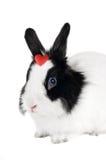 Coniglio con cuore rosso Immagini Stock