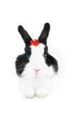 Coniglio con cuore rosso Immagini Stock Libere da Diritti