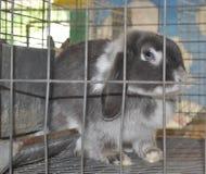 Coniglio con gli occhi azzurri in una gabbia fotografia stock