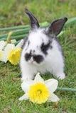 Coniglio con i fiori immagine stock