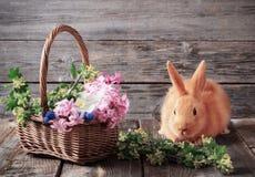 coniglio con i fiori della molla Fotografia Stock