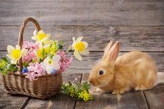 coniglio con i fiori della molla Fotografie Stock Libere da Diritti