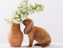 coniglio con i fiori della molla Immagini Stock Libere da Diritti