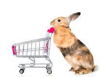 Coniglio con il carrello di acquisto Isolato su priorità bassa bianca Fotografia Stock