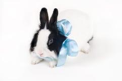 Coniglio con il nastro blu isolato Immagini Stock Libere da Diritti