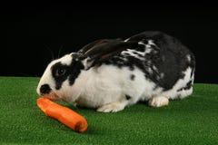 Coniglio con la carota Immagini Stock Libere da Diritti