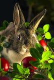 Coniglio con le uova di Pasqua rosse fotografia stock libera da diritti