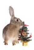 Coniglio con un pelliccia-albero Immagini Stock Libere da Diritti