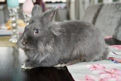 Coniglio decorativo di Gray Easter Fotografia Stock