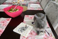 Coniglio decorativo di Gray Easter Fotografie Stock Libere da Diritti