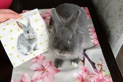 Coniglio decorativo di Gray Easter Fotografia Stock Libera da Diritti