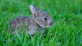 Coniglio del bambino Fotografie Stock Libere da Diritti