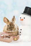 Coniglio del bambino Immagine Stock Libera da Diritti