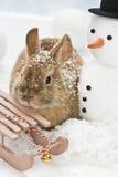 Coniglio del bambino Immagine Stock