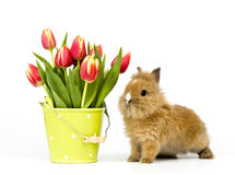 Coniglio del bambino con i tulipani Fotografie Stock Libere da Diritti