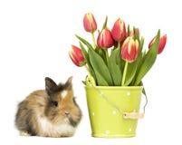 Coniglio del bambino con i tulipani Fotografia Stock