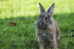 Coniglio del bambino in erba Immagine Stock Libera da Diritti