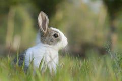 Coniglio del bambino nell'erba Fotografia Stock