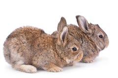 Coniglio del bambino su bianco fotografia stock