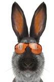 Coniglio del ritratto Immagine Stock Libera da Diritti