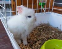 Coniglio dell'animale domestico nella sua gabbia fotografie stock