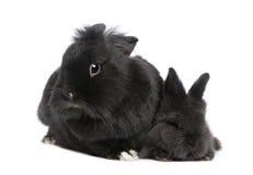 Coniglio della madre ed il suo bambino fotografie stock libere da diritti