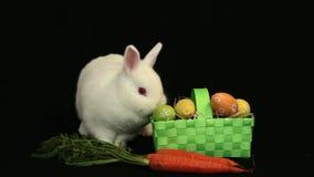 Coniglio di coniglietto bianco che fiuta intorno ad un canestro delle uova di Pasqua e di una carota stock footage
