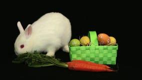 Coniglio di coniglietto bianco che fiuta intorno ad una carota e ad un canestro delle uova di Pasqua video d archivio