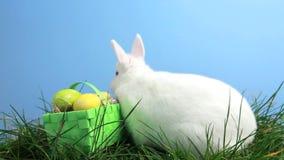 Coniglio di coniglietto bianco che fiuta intorno all'erba ed al canestro delle uova di Pasqua archivi video