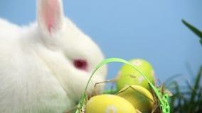 Coniglio di coniglietto bianco che fiuta un canestro delle uova di Pasqua nell'erba stock footage