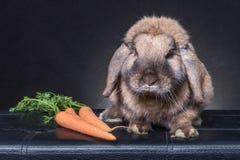 Coniglio di coniglietto di Brown Fotografia Stock Libera da Diritti