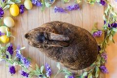 Coniglio di coniglietto di Gray Easter con i fiori lilla e le uova della molla porpora sul bordo di legno, vista superiore Immagine Stock Libera da Diritti