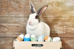 Coniglio di coniglietto grigio che sembra frontward allo spettatore, poco coniglietto che si siede sulla scatola di legno con i s immagini stock