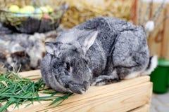 Coniglio di coniglietto di pasqua con le uova dipinte Concetto di Pasqua, dell'animale, della molla, di celebrazione e di festa immagini stock libere da diritti