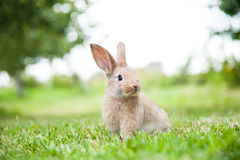 Coniglio di coniglietto sull'erba Fotografie Stock