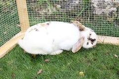 Coniglio di coniglietto in una gabbia Fotografia Stock Libera da Diritti