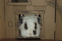 Coniglio di Lionhead che guarda dal castello del cartone Fotografie Stock Libere da Diritti