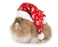 Coniglio di Lionhead nel cappello di nuovo anno. Immagini Stock Libere da Diritti