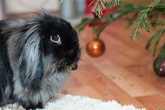 Coniglio di Natale Fotografia Stock