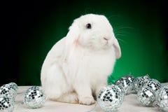 Coniglio di natale bianco con le decorazioni Immagine Stock