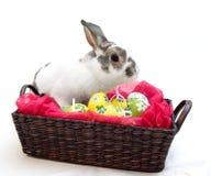 Coniglio di Pasqua immagini stock