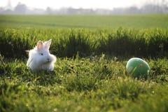 Coniglio di Pasqua su erba verde Fotografia Stock
