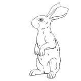 Coniglio disegnato a mano di vettore Fotografie Stock Libere da Diritti