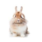 Coniglio divertente Fotografia Stock Libera da Diritti